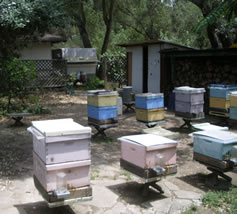 Bee yard and trailer lab